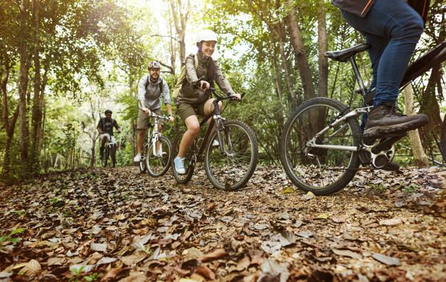 Location de vélo pour balade en pleine nature